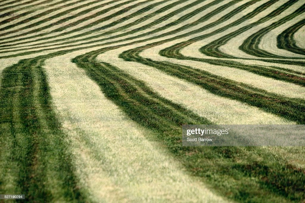 Cut hay field : Foto stock