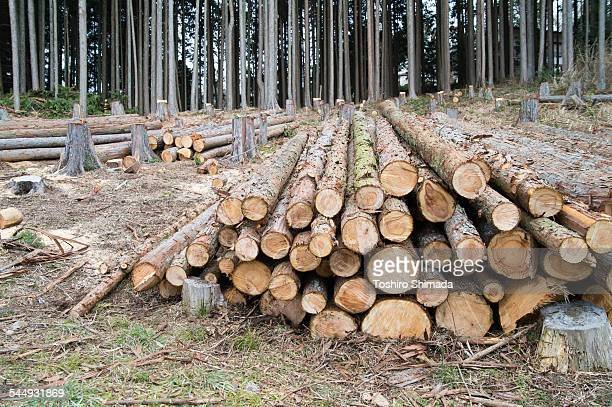 Cut logs in the mountain