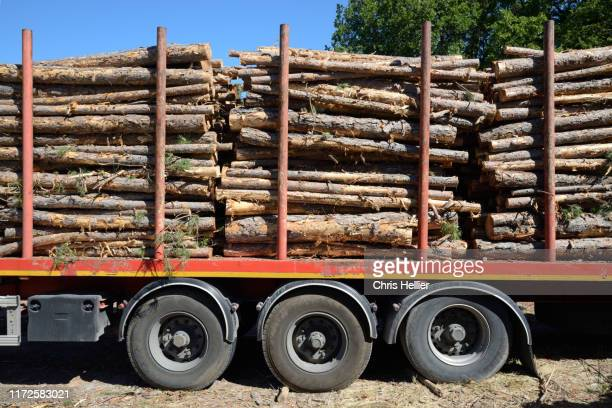 cut logs or timber on timber truck or trailer - transport stock pictures, royalty-free photos & images