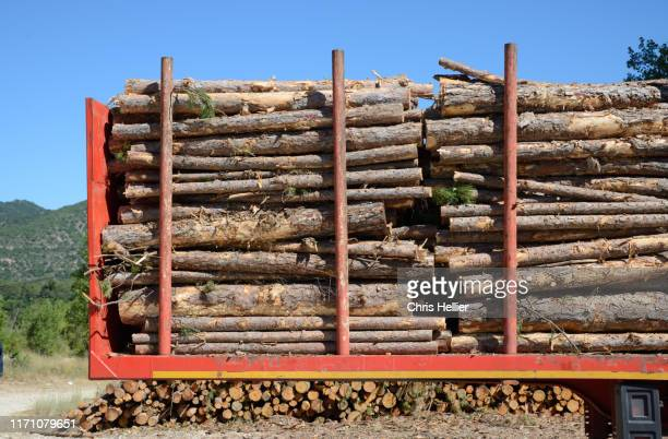 cut logs or timber on timber truck - firewood stock pictures, royalty-free photos & images