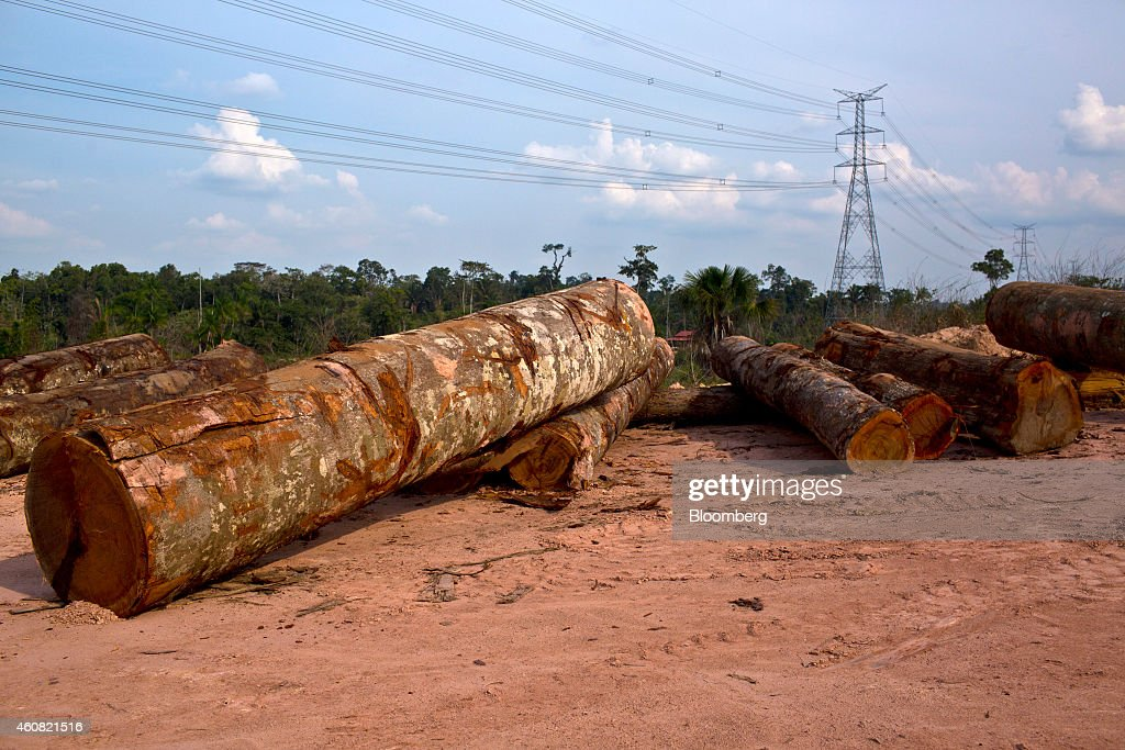 Cut logs sit at a sawmill in Anapu, Brazil, on Thursday, Dec. 18, 2014. The rate of deforestation Brazil's Amazon rain forest dropped 18 percent over the last year, according to a report by the country's environment minister in November. Photographer: Dado Galdieri/Bloomberg via Getty Images