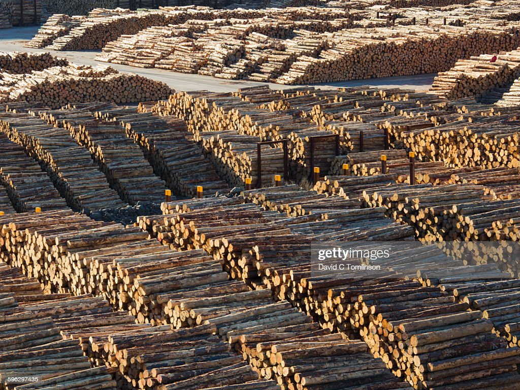 View over vast timber yard, cut logs stacked in readiness for loading and export, Waimahara Wharf, Shakespeare Bay, Picton, Marlborough District, Marlborough, South Island, New Zealand, Oceania.