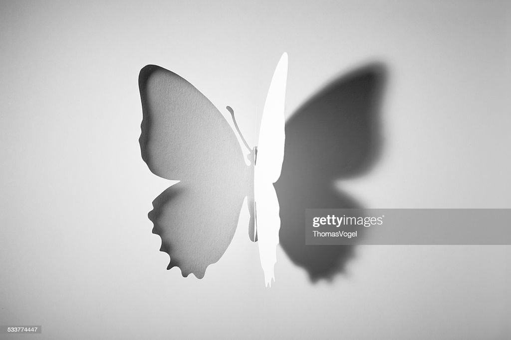 Cut out Paper Buttlerfly : Stock Photo