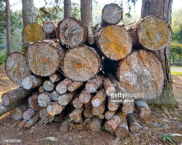 cut pine wood - slash and burn stock pictures, royalty-free photos & images