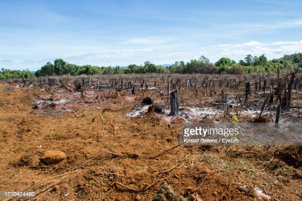cut trees and burnt down forest for agriculture, slash and burn as seen in the amazon brazil - instorten stockfoto's en -beelden