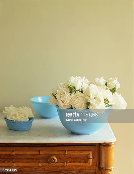 cut white roses still life - dana white stock pictures, royalty-free photos & images