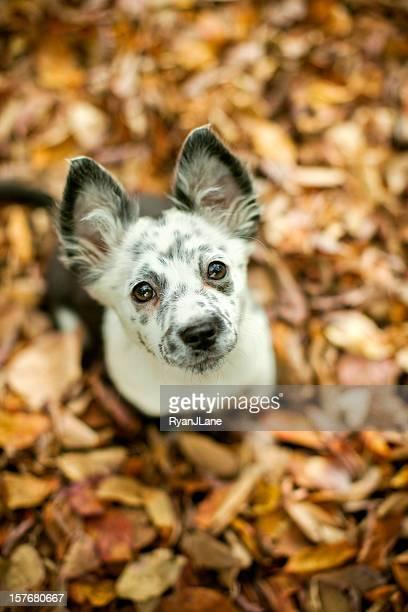 Cute Autumn Puppy