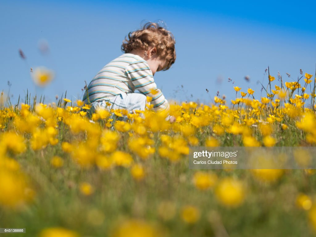 Cute Baby Hiding Between Yellow Flowers Stock Photo Getty Images