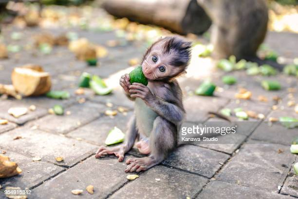 cute baby monkey eating vegetable - monkey stock pictures, royalty-free photos & images