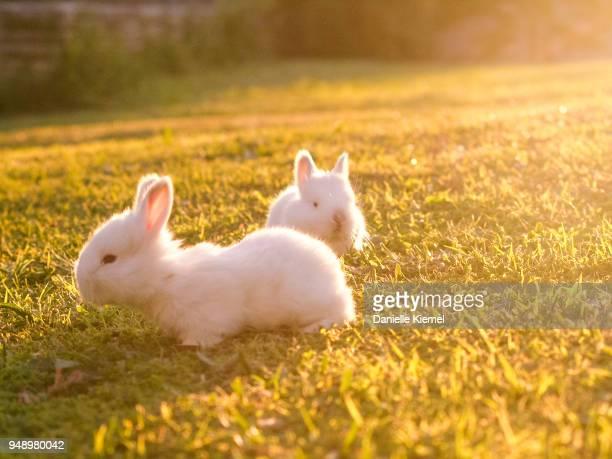 cute baby rabbits on grass - coniglietto foto e immagini stock