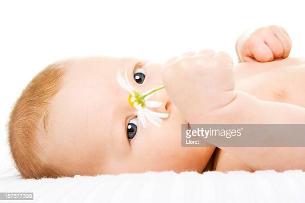 linda bebé con daisy mirando cámara - maya desnuda fotografías e imágenes de stock