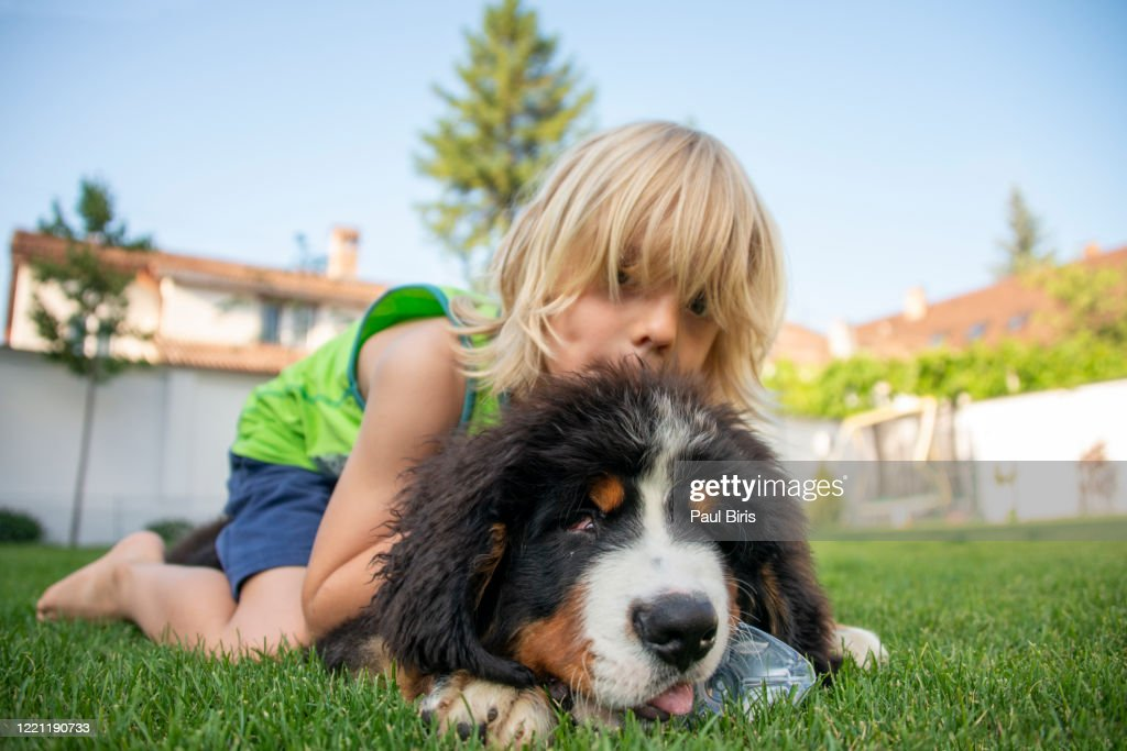 Cute Bernese Mountain Dog Puppy Holds Plastic Bottle In Mouth And Boy Embracing Him High Res Stock Photo Getty Images