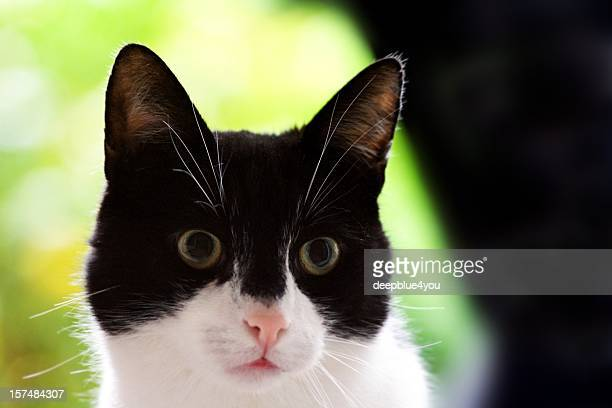 cute black and white domestic cat head shot green background - vertebrate stock pictures, royalty-free photos & images