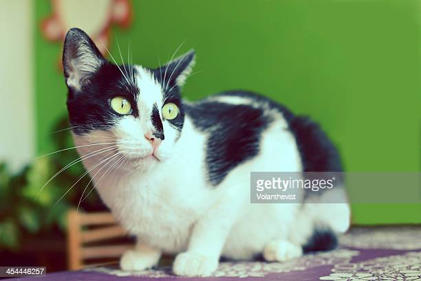 Black Cat With Green Eyes Stock Photos And Pictures