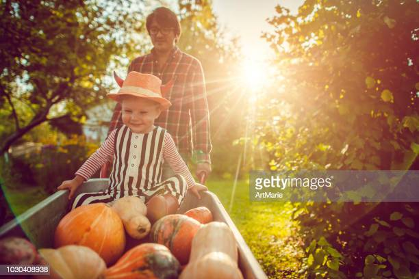 cute boy and his father with pumpkins in autumn - wheelbarrow stock photos and pictures