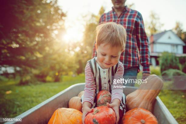 cute boy and his father with pumpkins in autumn - garden harvest stock pictures, royalty-free photos & images