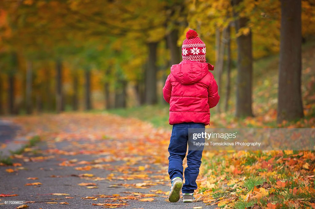 Cute boy, child, playing in autumn alley in the park, gathering leaves, enjoying the sunny day. Children happiness concept : Stock Photo