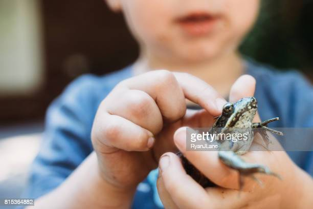 cute boy holding frog - frog stock pictures, royalty-free photos & images