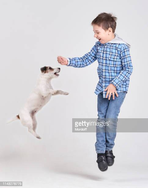 cute boy jumping with his jack russell terrier - jack russell terrier imagens e fotografias de stock
