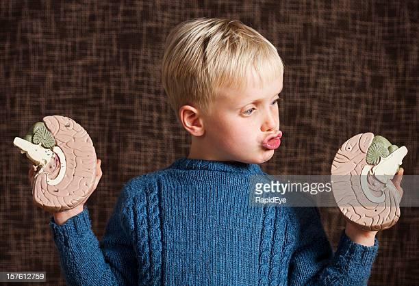 Cute boy looks at two halves of model brain, perplexed