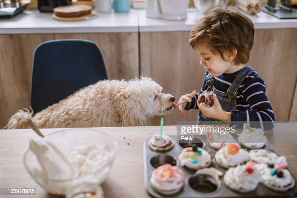 cute boy sharing his cookie with his pet - animal behaviour stock pictures, royalty-free photos & images