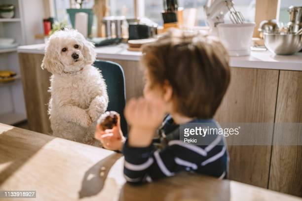 cute boy sharing his cookie with his pet - suplicar imagens e fotografias de stock