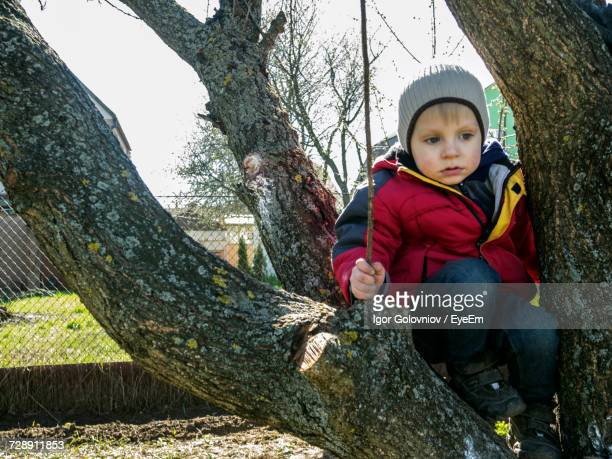 cute boy sitting on tree trunk - igor golovniov stock pictures, royalty-free photos & images