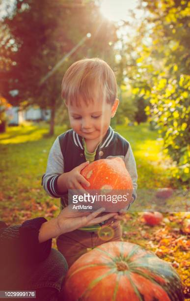 cute boy with pumpkins in autumn - carving craft product stock pictures, royalty-free photos & images