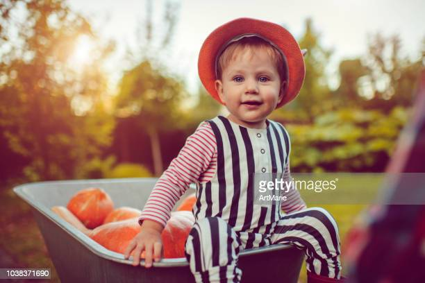 cute boy with pumpkins in autumn - october stock pictures, royalty-free photos & images