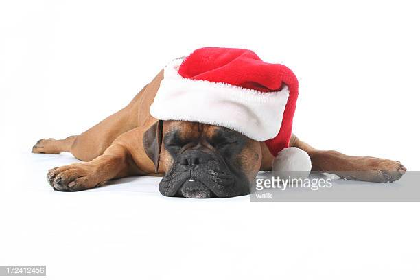 Cute brown puppy sleeping while wearing a Santa hat