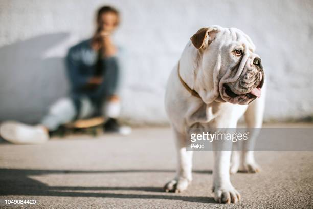 cute bulldog and his owner, young skateboarder - english bulldog stock pictures, royalty-free photos & images