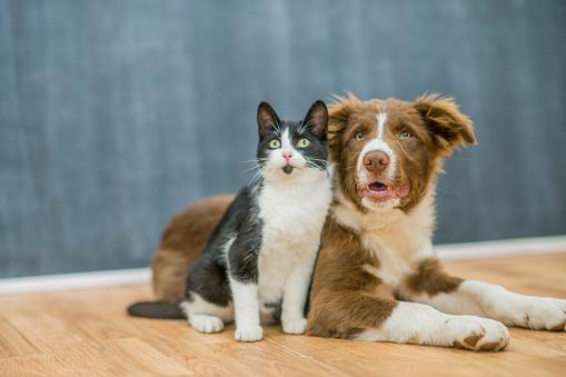 Cute cat and dog portrait 1137572791