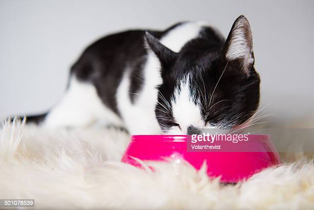 Cute cat eating at home from a pink cat bowl