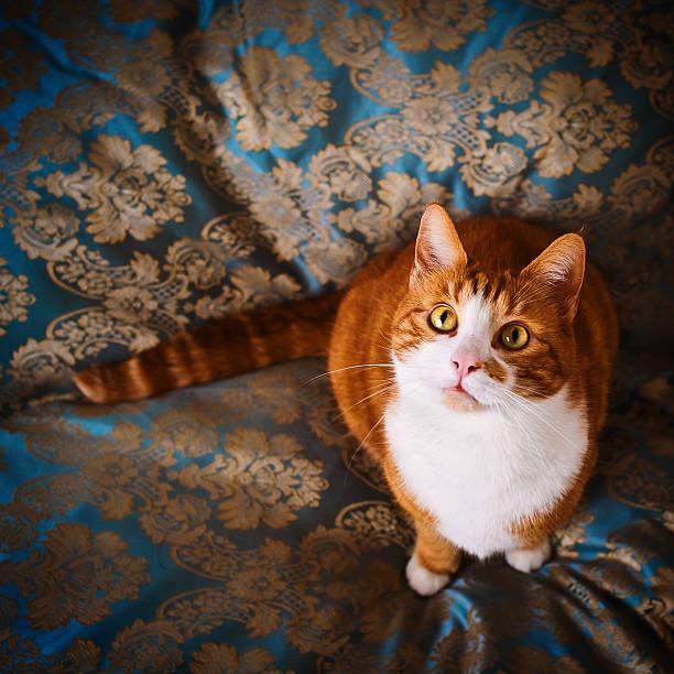 Cute cat named Nisse