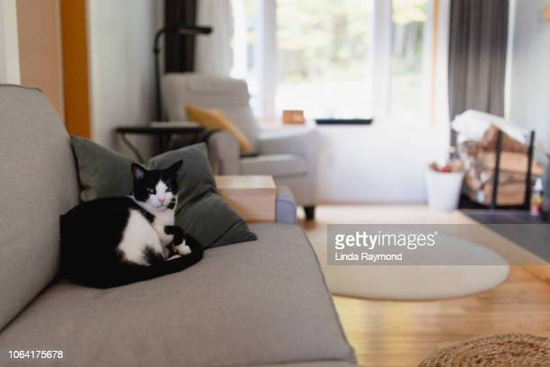 cute cat  on a couch - linda wilton stock pictures, royalty-free photos & images
