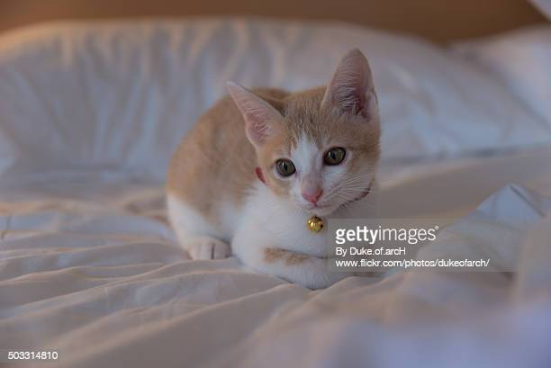 Cute cat on the bed