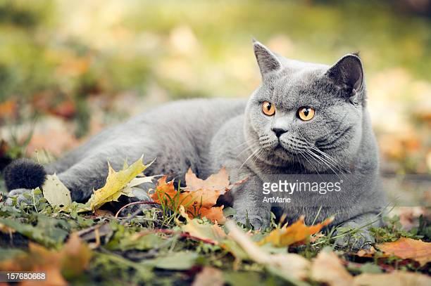 かわいい猫 oudoors