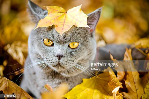 cute cat oudoors - british culture stock pictures, royalty-free photos & images