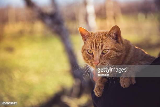 cute cat - hairy old man stock pictures, royalty-free photos & images