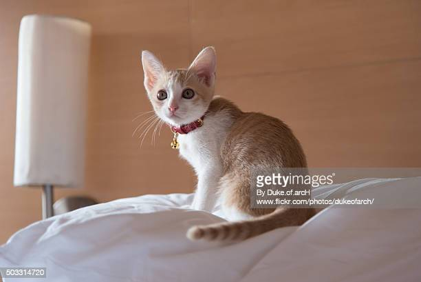 Cute Cat Sitting on Bed