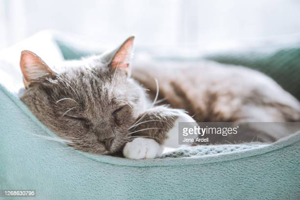 cute cat sleeping - pet bed stock pictures, royalty-free photos & images
