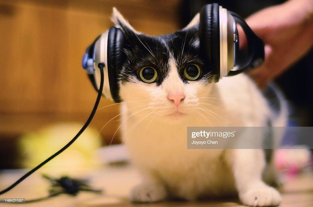 Cute cat with headphones : Stock Photo