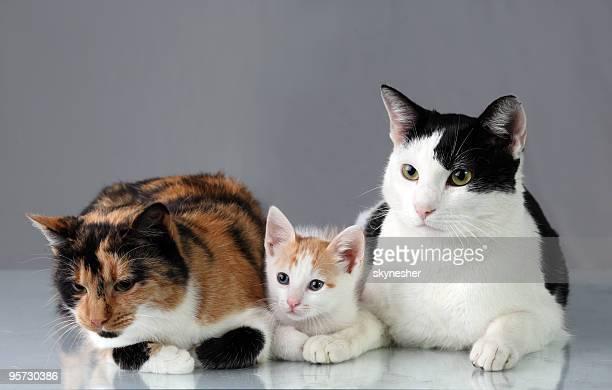 かわいい猫ご休息いただけます。 - 三匹 ストックフォトと画像