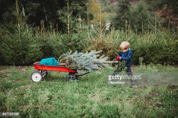 Nettes Kind trägt einen Weihnachtsbaum