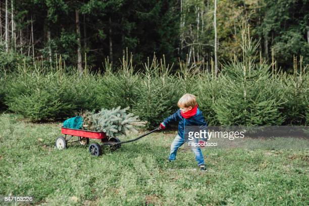 cute child carrying a christmas tree - 2 5 months stock photos and pictures