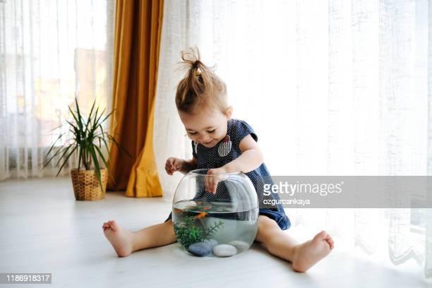 schattig kind voedt zijn goudvis - alleen één jongen stockfoto's en -beelden