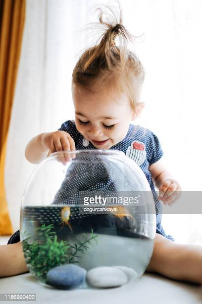 nettes kind füttert seinen goldfisch - aquarium haustierbedarf stock-fotos und bilder