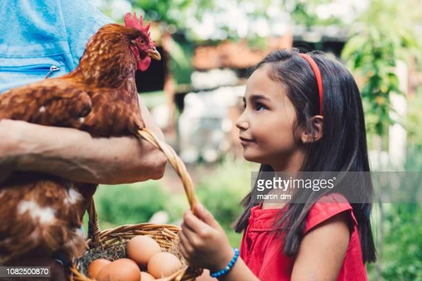 mignon enfant regardant une poule brune face à face - poulailler photos et images de collection