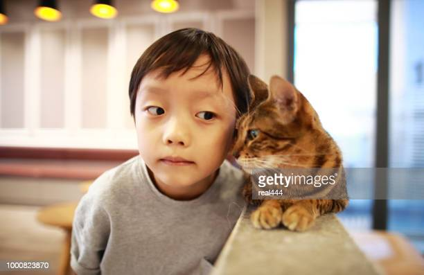 cute children and cat - hairy asian stock pictures, royalty-free photos & images