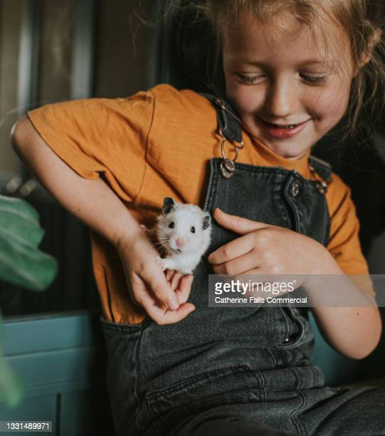 cute, confident young girl plays with a curious little hamster who peeks out from the side of her dungarees - animal behaviour stock pictures, royalty-free photos & images